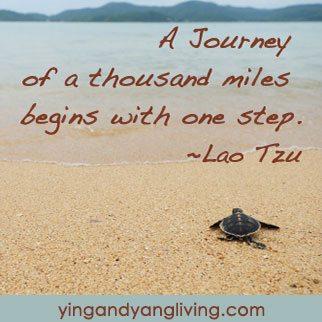 Zen Message Turtle on Beach by Lao Tzu