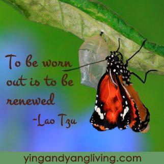 Butterfuly-on-Leaf---LaoTzuYY
