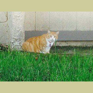 The Zen Cat…